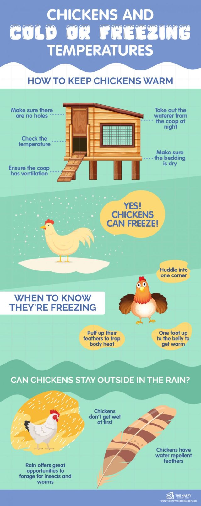 Chickens And Cold