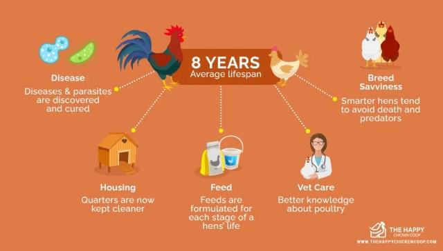 How Long Backyard Hens Live