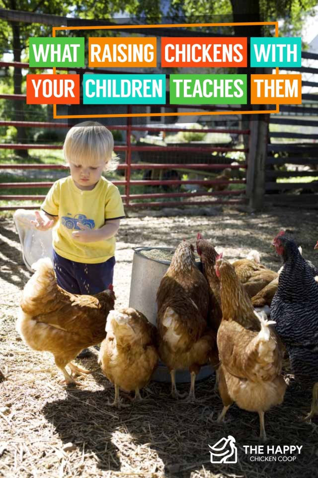 What Raising Chickens with Your Children Teaches Them