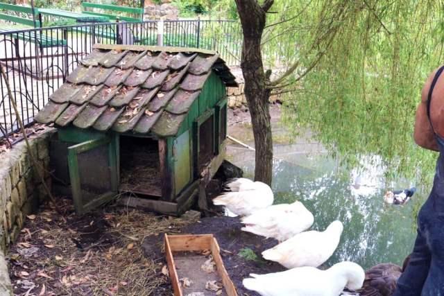 duck pond near coop