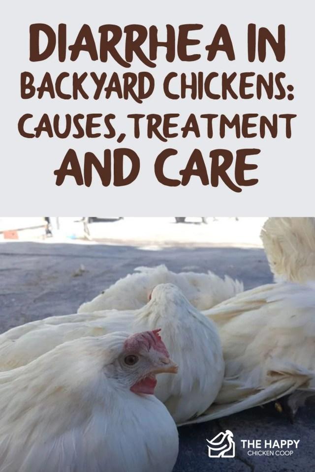 Diarrhea in Backyard Chickens
