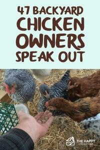 47 Backyard Chicken Owners Speak Out