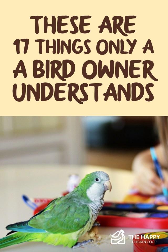 Bird Owner Understands