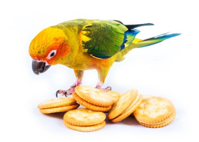 poisonous to birds