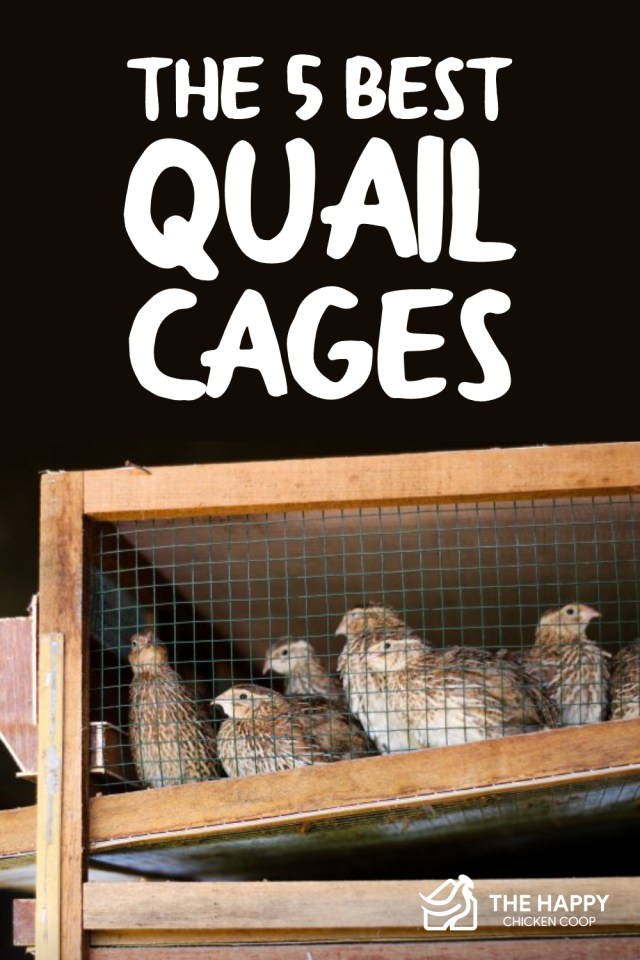 the-5-best-quail cages