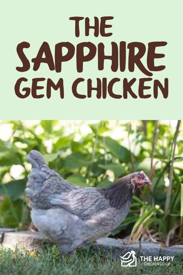 Sapphire Gem Chicken