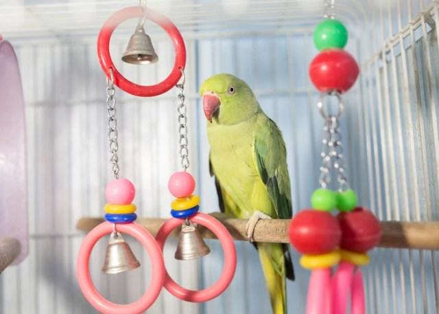 housing tip for beginner bird owners