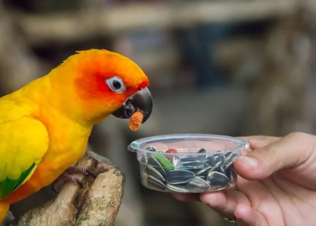 What pet bird feed should you choose