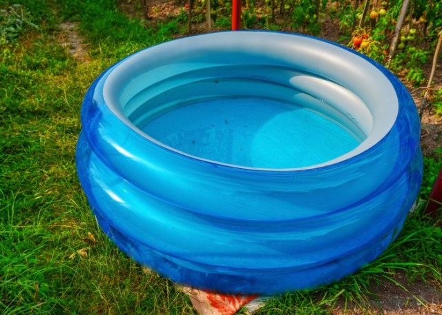 boredom buster idea for your goats - kiddie pool