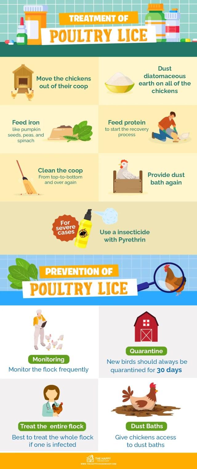 Chicken Lice