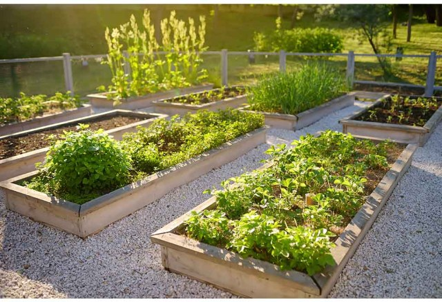grow your own food