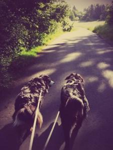 Morning Walks - 3