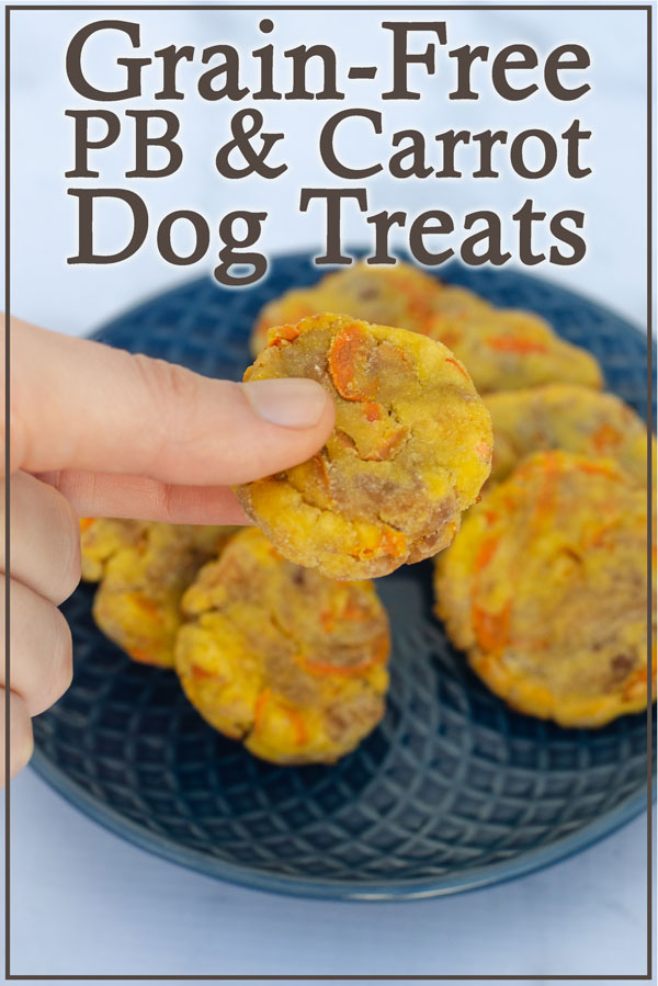 Is your dog sensitive to grains? They will absolutely love these grain-free peanut butter carrot dog treats! My dog Blaze sure loves them!