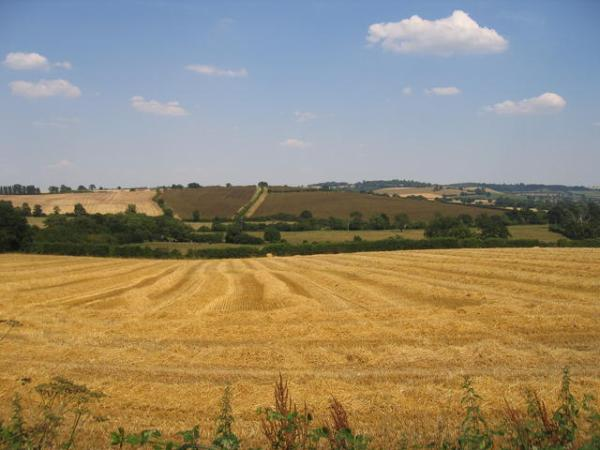 Hay harvest, credit David Stowell via Wikimedia