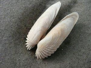 photo via Wikimedia