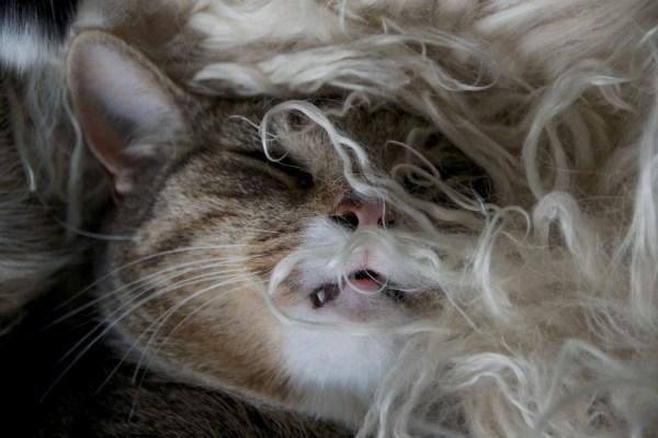 Poochcat2