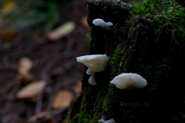 Fungus (7)