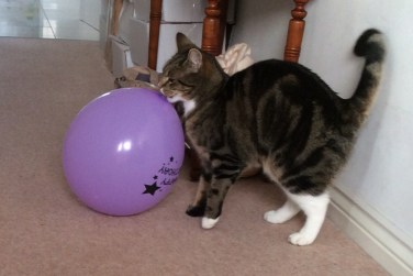 Purdey and balloon (2)