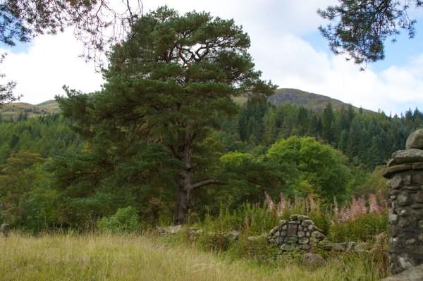Callander graveyard (5)