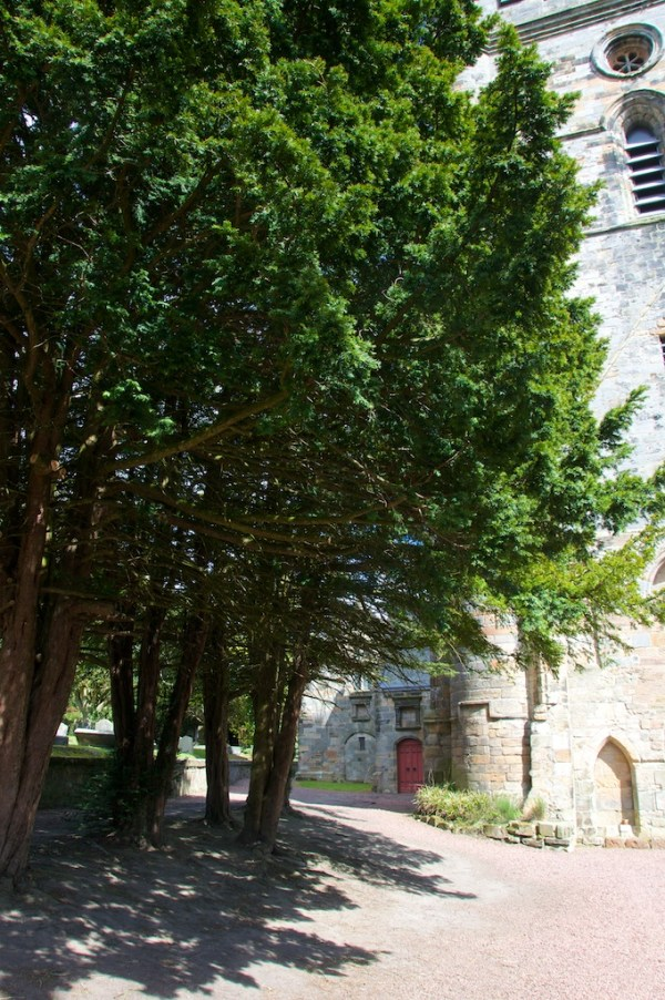 Yew trees, Culross Abbey church