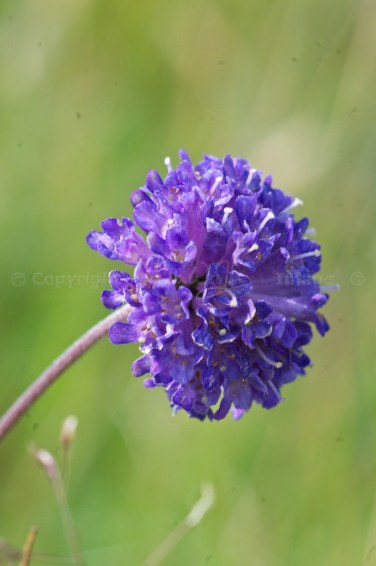 Close-up of flowerhead