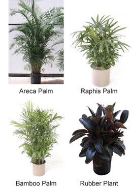 house-plants-1