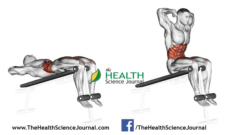© Sasham | Dreamstime.com - Exercising for bodybuilding. Lifts torso on an incline bench