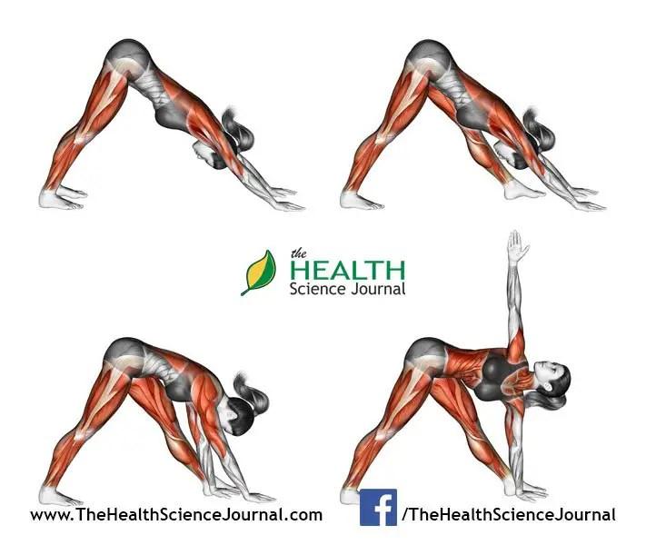 © Sasham   Dreamstime.com - Yoga exercise. Triangle Pose. Trikonasana. Female