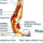 Exercises to Improve Flexibility and Movement Precision of Your Back & Spine, Finale