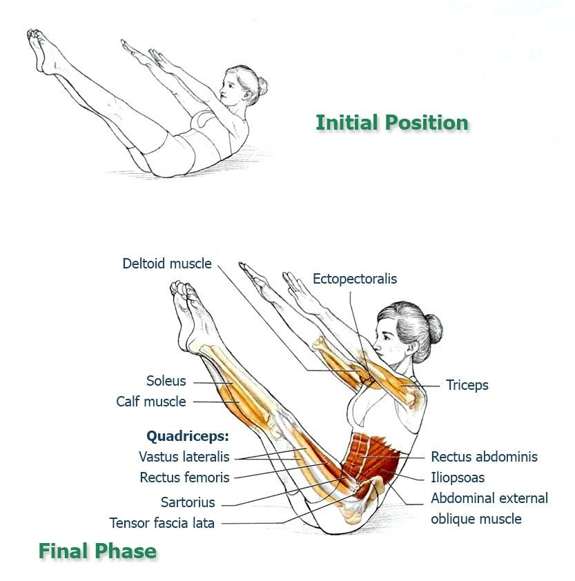 Science Facts Exercise: Abdominal Exercises For Spinal And Core Movement And