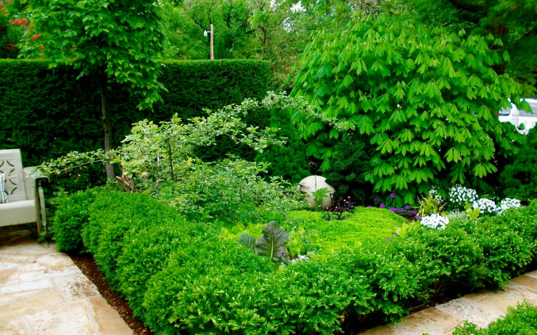 Top 7 Reasons to Transform Your Yard into an Edible Landscape