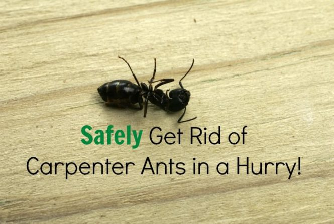 Outdoor Ant Killer Plus Shaker Bag