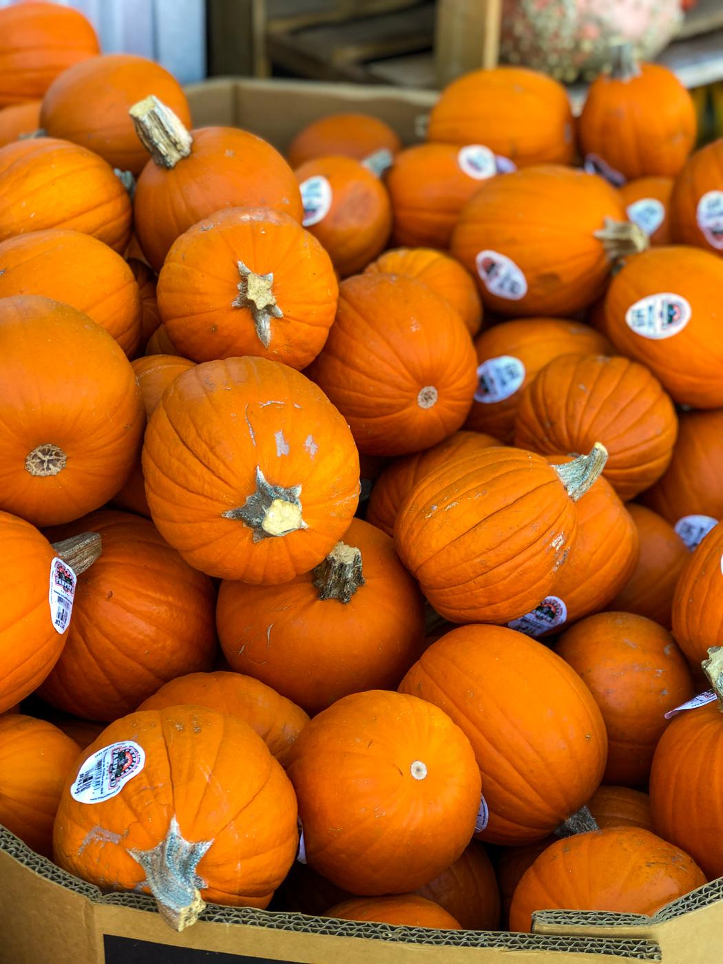 Meet Your Ingredients: Sugar Pumpkin