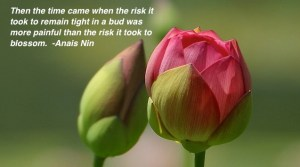 Then the time came when the risk it took to remain tight in a bud was more painful than the risk it took to blossom. -Anais Nin