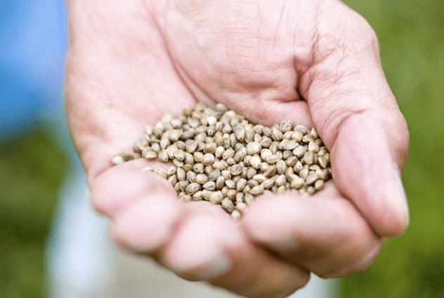 Hemp Seed Imports