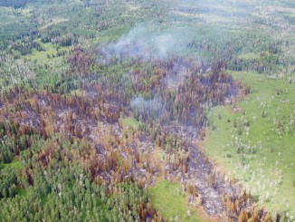 """The Milk Creek Fire, 15 miles northeast of Meeker and 3.5 miles east of Yellow Jacket Pass, has grown very little and moved quite slowly for having been burning since July 4, said Ken Coffin, the district ranger for the Blanco Ranger District of the White River National Forest. """"The Milk Creek fire … remains at approximately 112 acres,"""" Coffin said. """"You'll see in the photo that when the fire reached the aspen and green vegetation outside the sub-alpine fir patches, the fire spread was halted."""""""