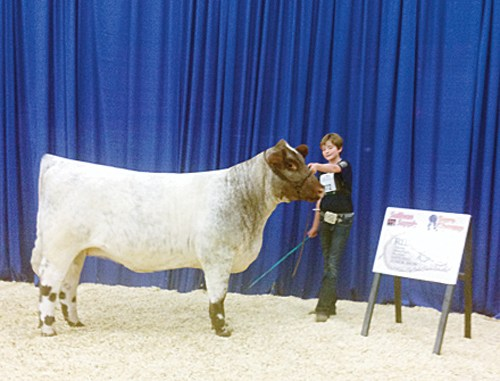 "Macy Collins of Meeker poses during the Louisville, Ky., judging with her heifer, AF Revival or ""Viv,"" at the Junior National Shorthorn Show and Conference. Collins competed against 450 others with Viv, who placed fourth in her class. Collins also placed in several other events."
