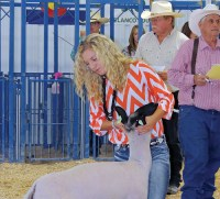 Taylor Neilson – Meeker Market Champion in Sheep Sold for $3,000 – Hayes Petroleum