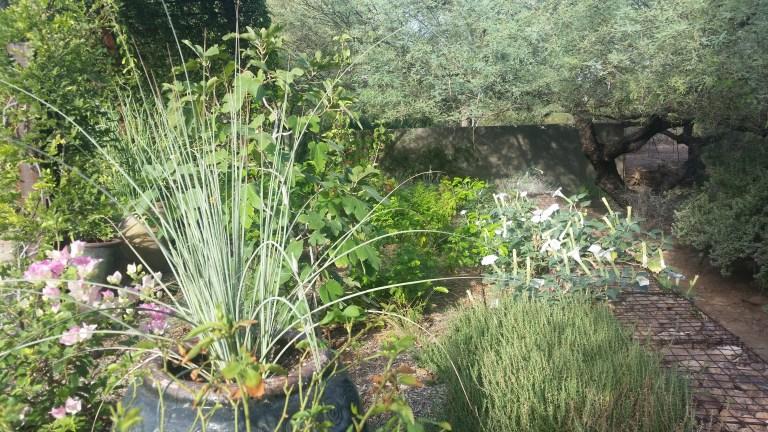 FLOWER ESSENCES OF MAY: SACRED DATURA, VITEX, AND CITRONELLA GERANIUM