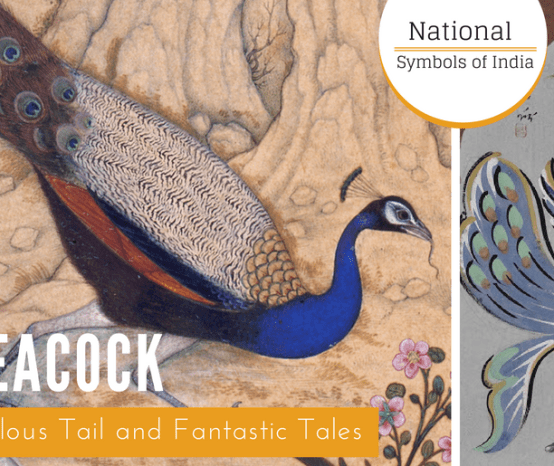The Peacock: Of a Fabulous Tail and Fantastic Tales