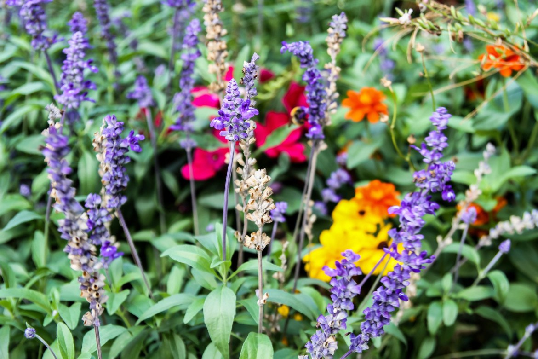 Cassis village flowers