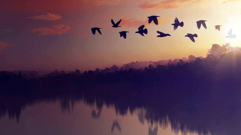 Disneyplus vogels