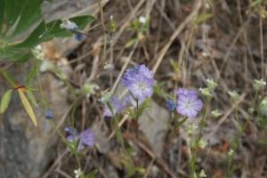 native plants flowers tumwater botanical area