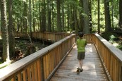 highway 20 hikes, hiking with children, accessible hikes, washington trails, north cascades