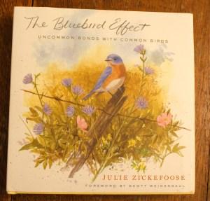 wildlife rehabilitation, bird art, painting birds, julie zickefoose