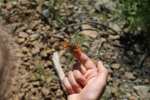kids in nature, butterflies in washington