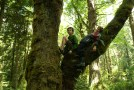 boys climbing trees, kids in nature, bridle trails state park