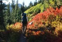 north cascades, easy hikes, fall colors, Lake Ann