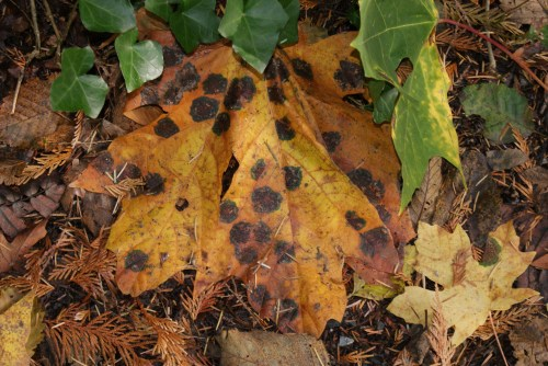 washington native plants, fall leaves, changing seasons