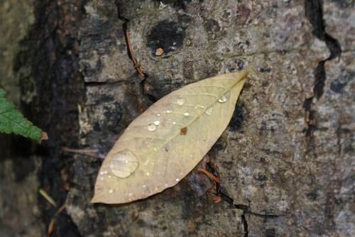 indian plum, fall colors, rain, autumn leaves, exploring nature with children, nature walk
